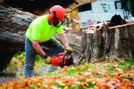 Benefits Of Hiring Tree Services