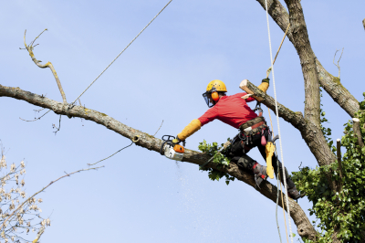 Tips for Getting the Best Tree Services